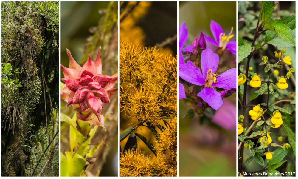 Flora de la parte alta de Manu Road /  Flora from the high part of Manu Road . Parque Nacional del Manu /  Manu National Park .
