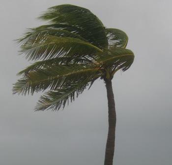 palm-tree-in-hurricane.jpg