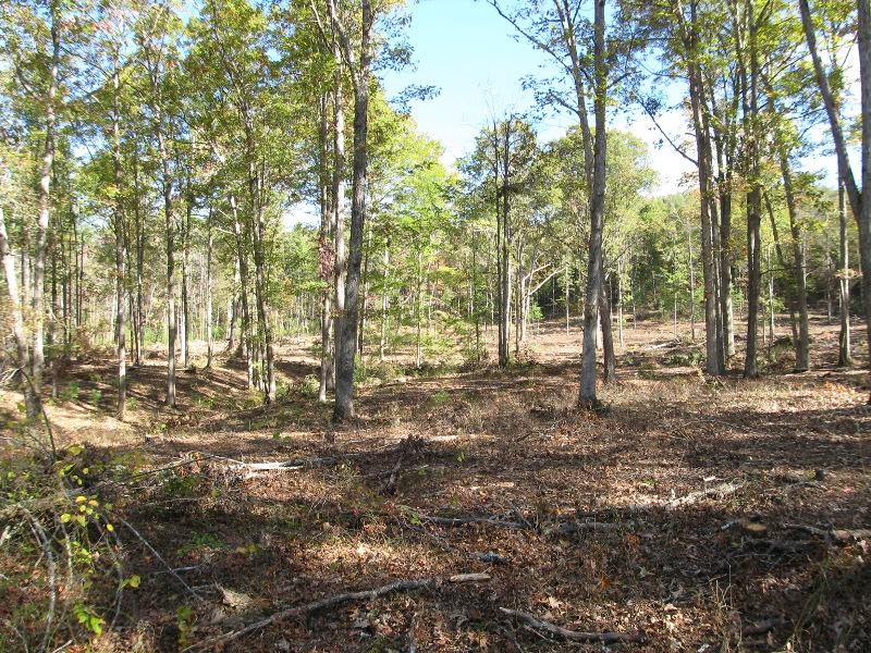 661 Nimrod Dr Lower Meadow toward River.jpg