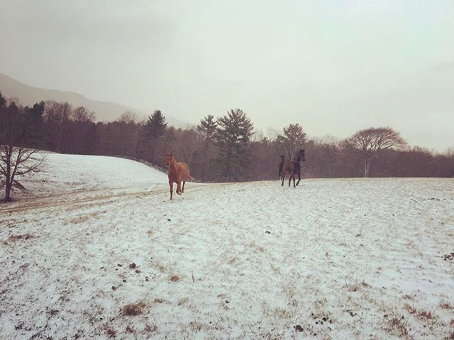 Hungry horses #breakfasttime . . .  #ruralamerica #countryliving #usa #virginiafarms #virginia #bathcountyva #jacksonrivervalley #hotspringsva #omni #thehomestead #alleghenymountains #shenandoah #realestate #bestplacestolive #lovewhereyoulive  #vacationrental #virginiamountainhomes #bacovaproperties