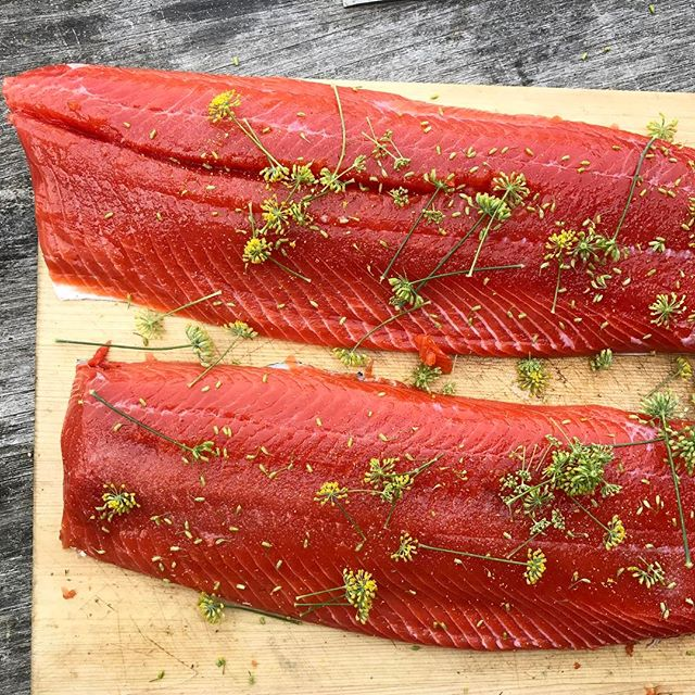 Before the #biggreenegg #sockeye #streetfennel