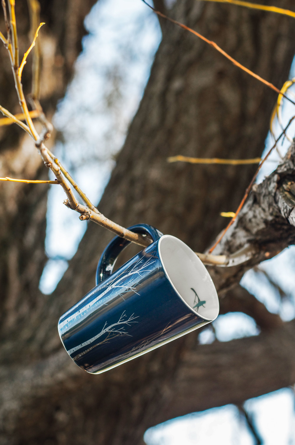 birch-feeder.jpg