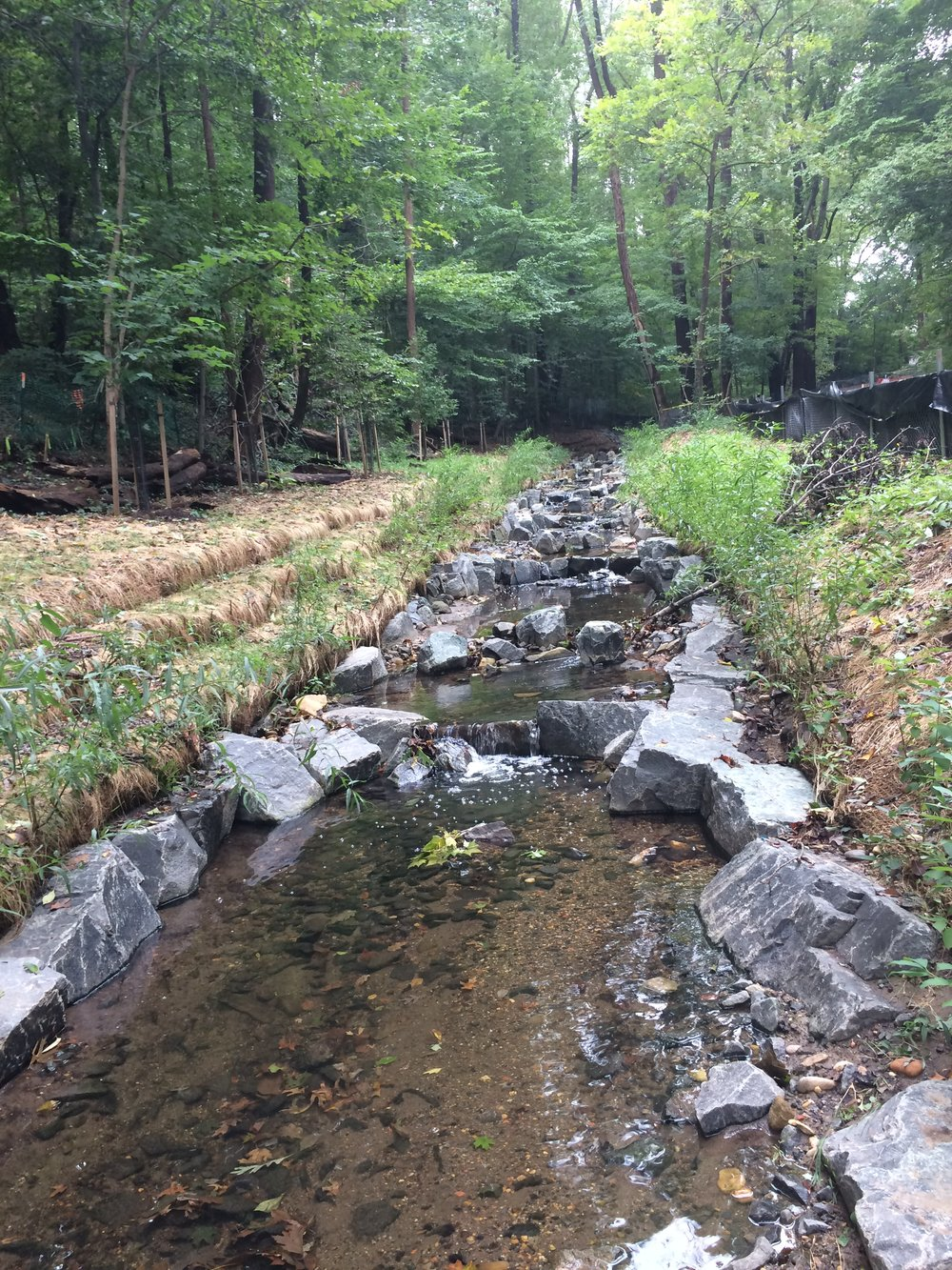 Friday morning view of the step pools in the project's stream restoration segment 1 after experiencing several inches of rainfall in the last few days