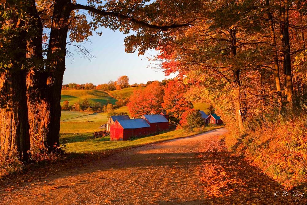 Jenny Farm_MG_4966.jpg