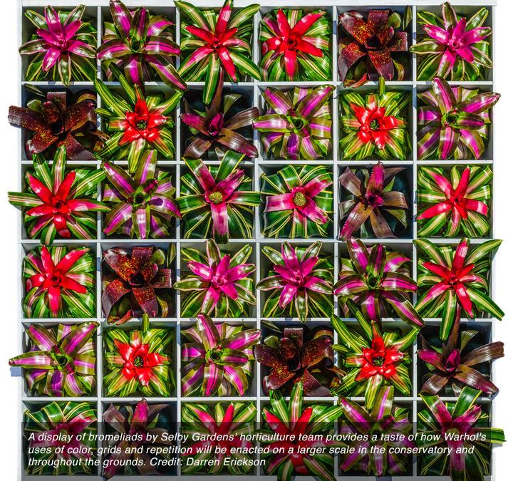 bromeliad_square-sm.jpg