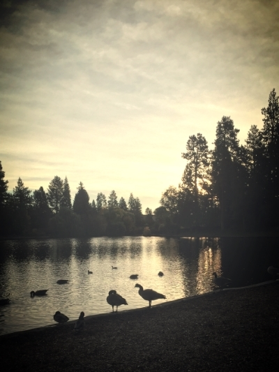 The ducks & geese at Drake Park in Bend