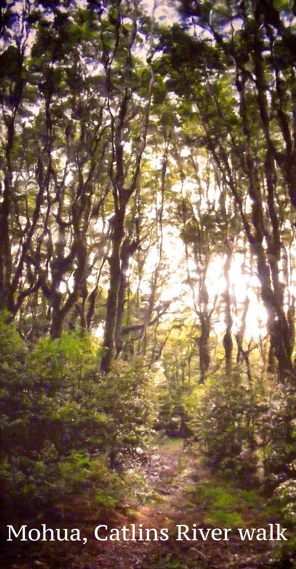 Mohua,Catlins river walk.jpg