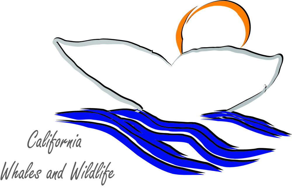 Cal Whales and Wildlife Logo color.jpg