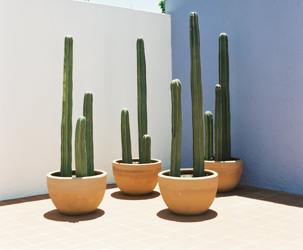 Barragan Casa Gilardi Patio Cactus