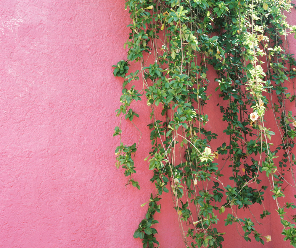 Casa Luis Barragan Pink Wall Plants