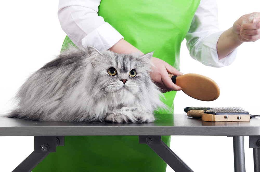 Cat Grooming Photo