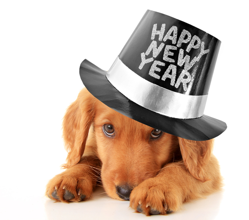 Think about how to make 2017 your pet's best year yet.