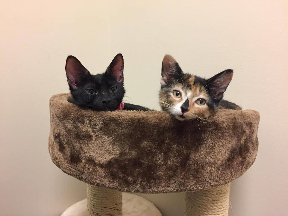 Peaches and Pepper, for their first kitten visit!