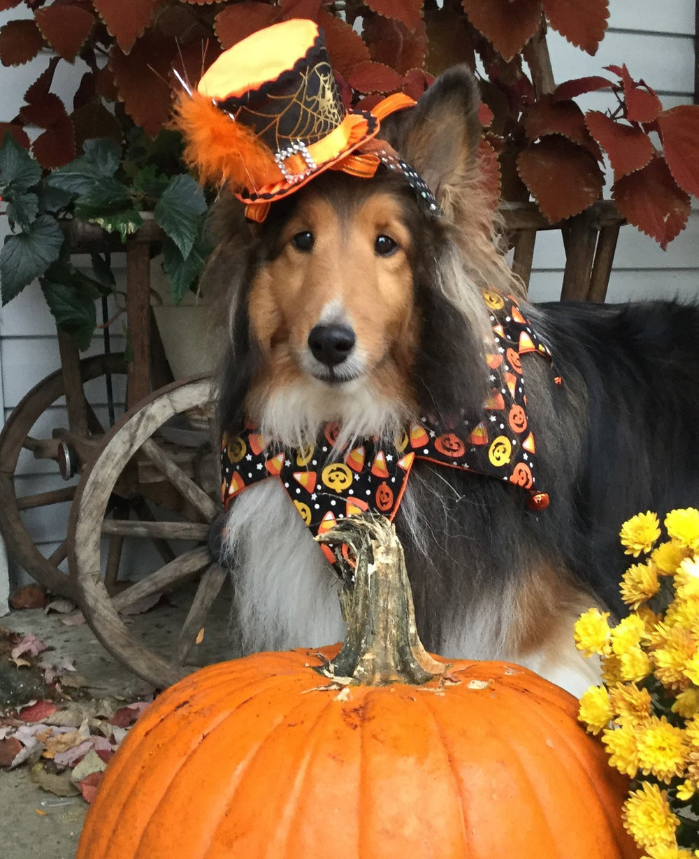 Pawtoberfest entries-15.jpg