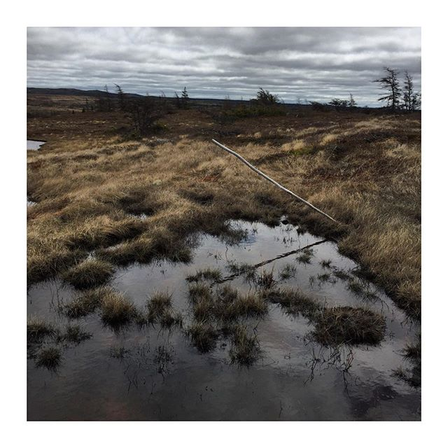Hiking over marshland is a crazy workout! #newfoundland #marshlands #vacation #nature