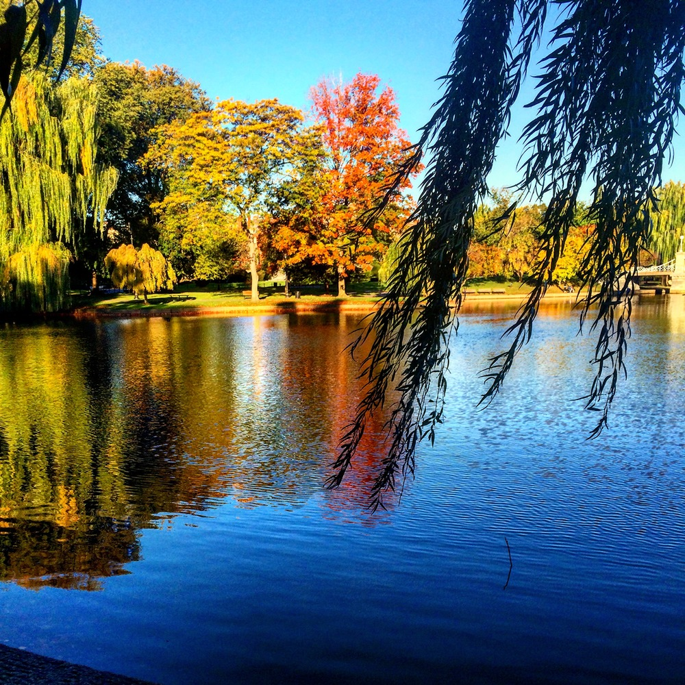 Another proud moment from 2015 was finally getting a full time job! Job searching was really difficult, but I survived it! This is the view on my commute into Boston everyday. I don't really like the train, so I try and get off and walk to work as much as possible. Walking through the Boston Gardens in the morning is absolutely breathtaking.
