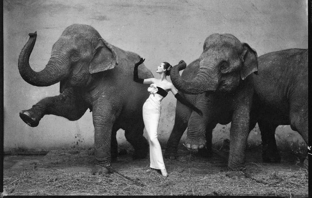 dovima-with-the-elephants.jpg