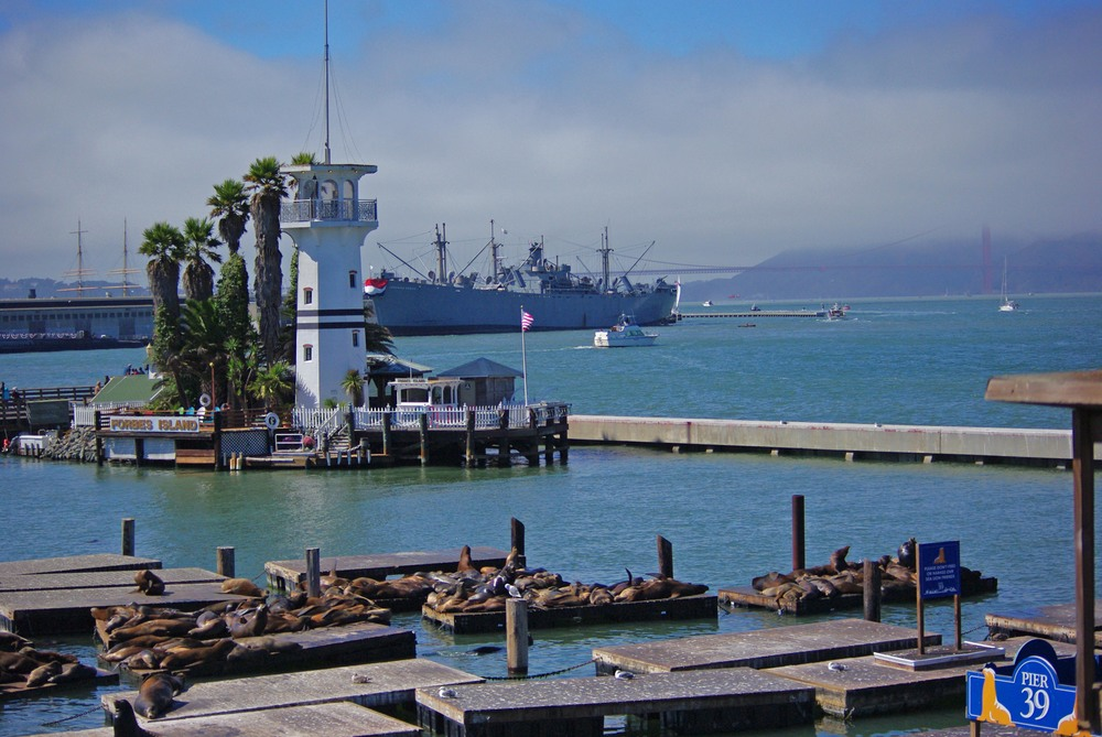3.	See the Sea lions at Pier 39