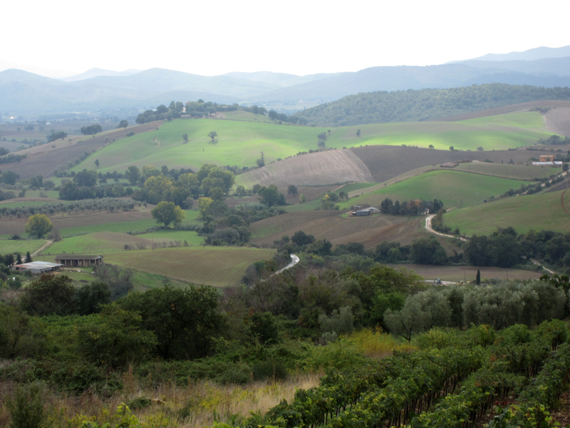 Rolling hillsides of olive groves, pasture, and vineyards are characteristic of Tuscany.