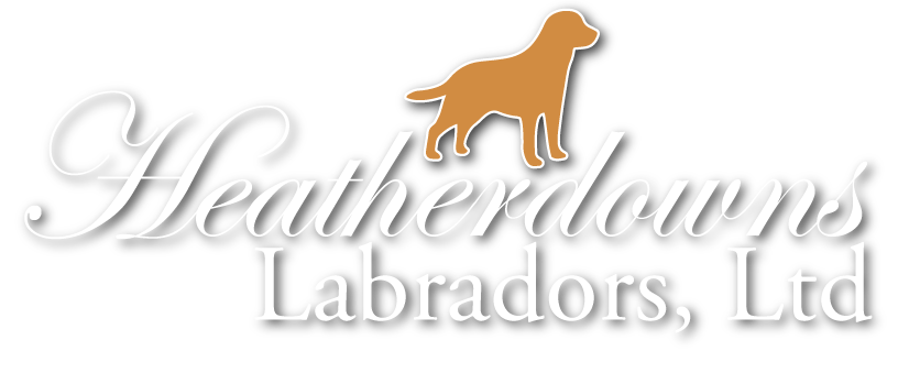 Heatherdowns Labradors, Ltd