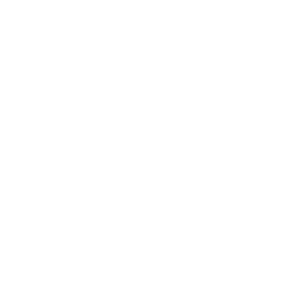 Ayelle Logo in white.png