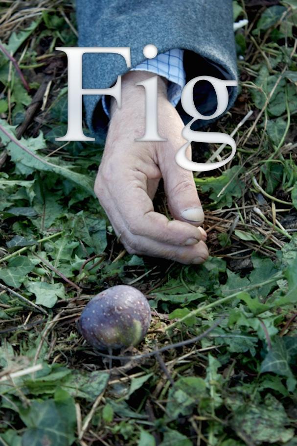 fig_1.jpg