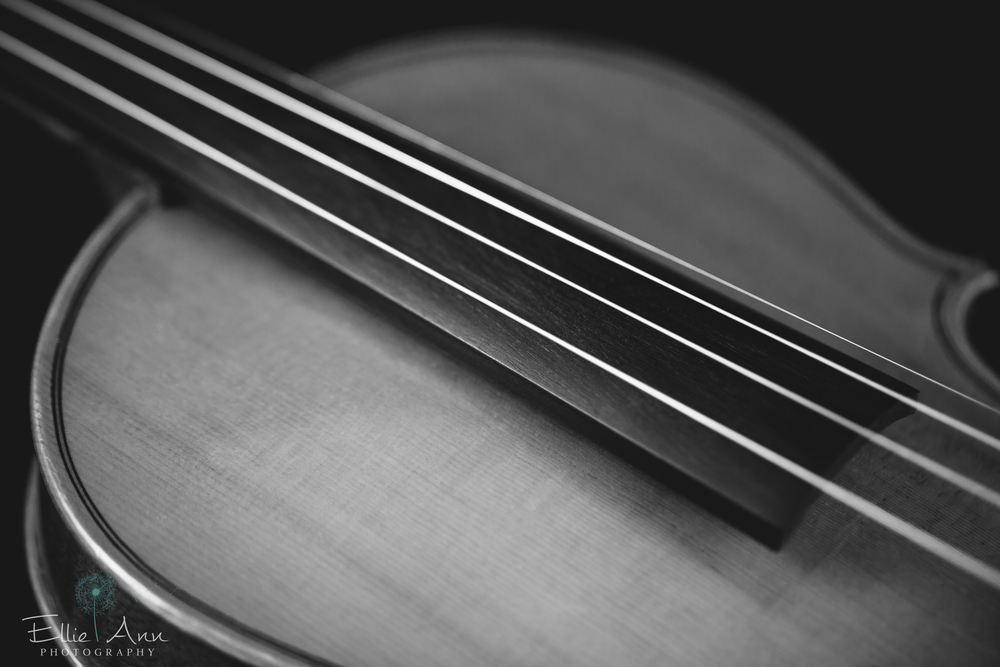 Violin-18.jpg
