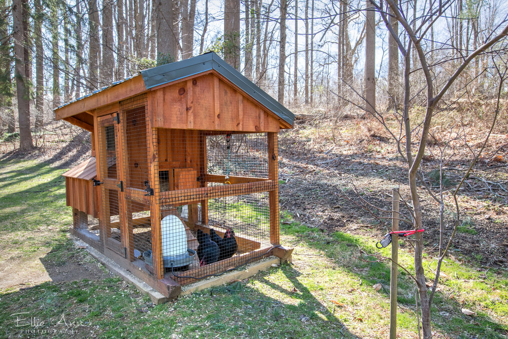 chicken coop- use.jpg