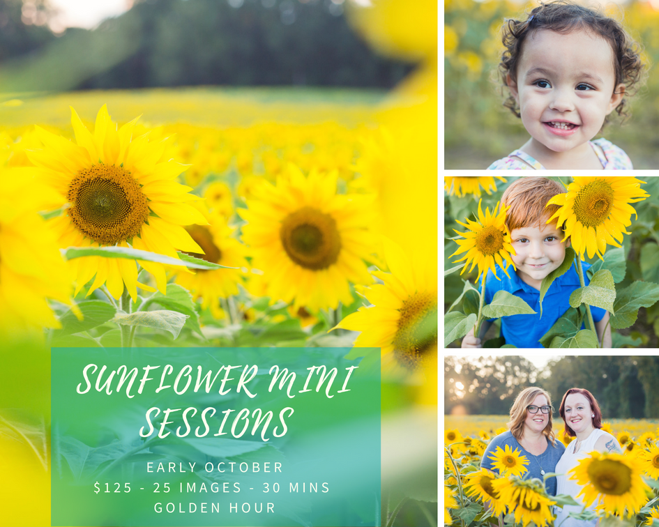 Sunflower Mini Sessions.png