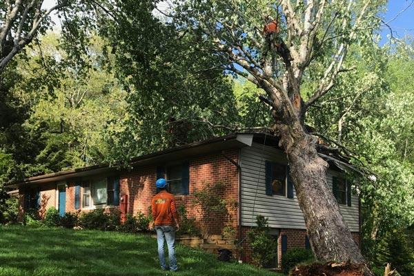 tree damage storm damage atlanta