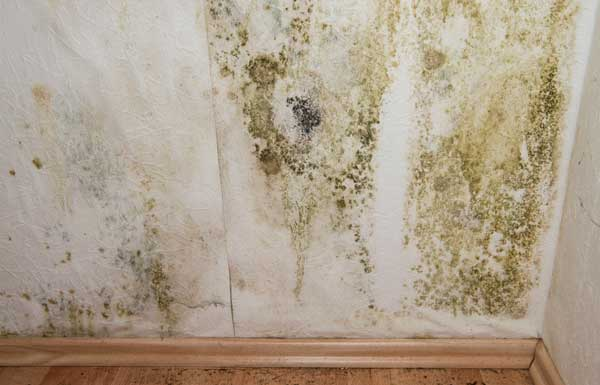 Black mold side effects