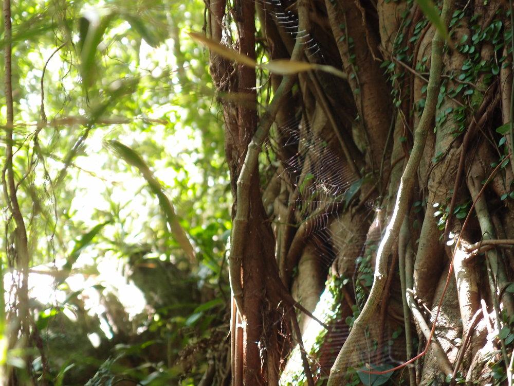 屋久島の木々。