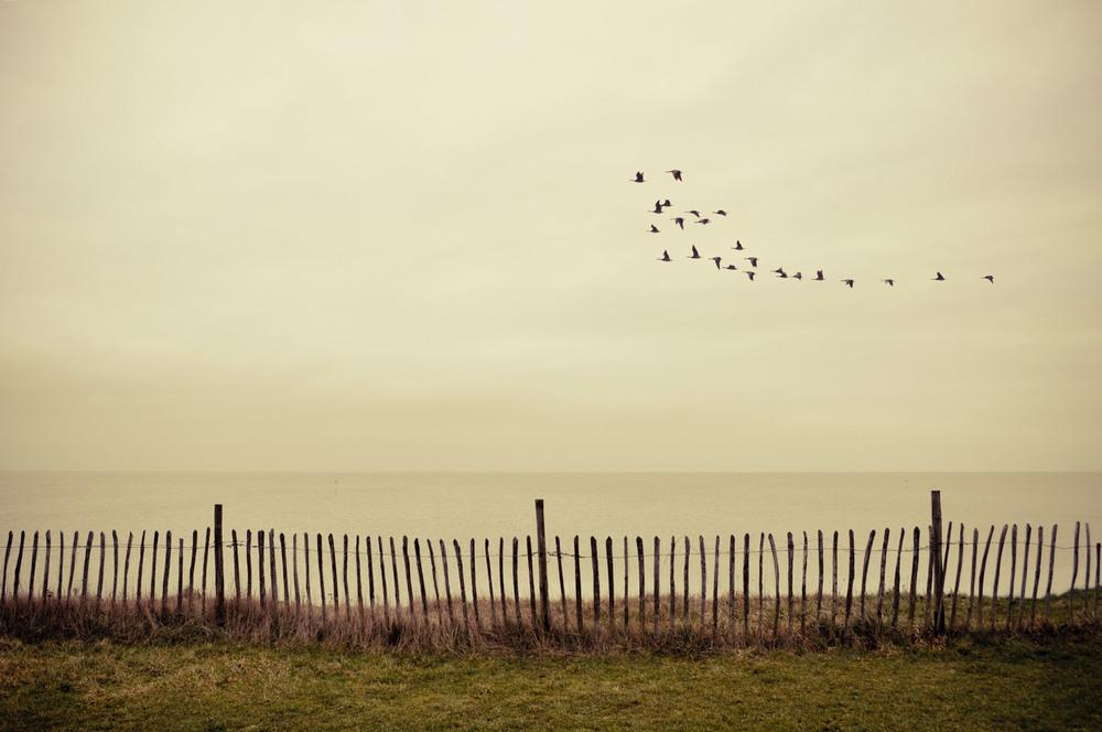 Flock, UK