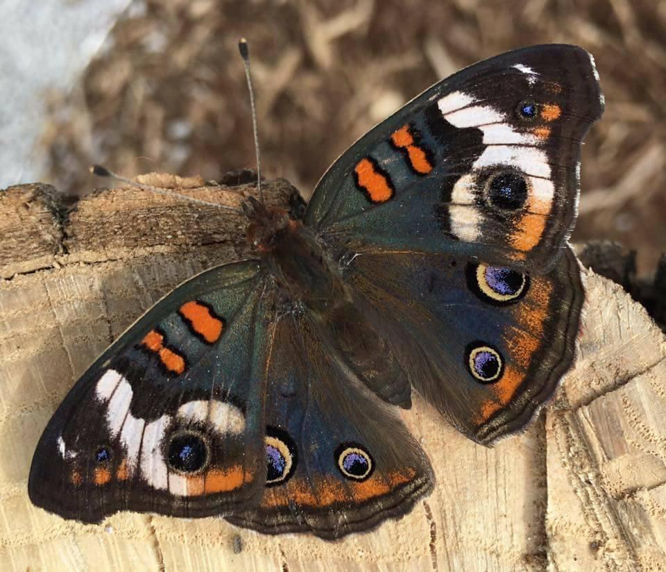 Charmant Butterfly Garden