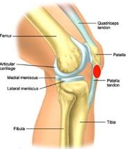 tendinitis-overuse-injuries-0008.jpg
