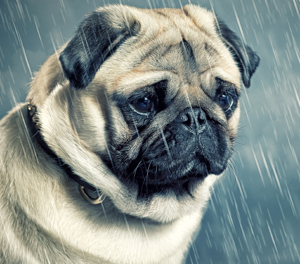 selfemloyeddog.jpg