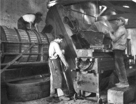 Early California winemaking pioneers de-stemming white grapes and loading the press, circa 1930,