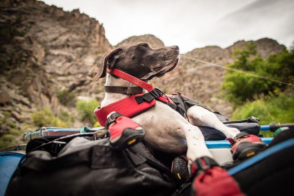 River dog. PC- Russ Schnitzer