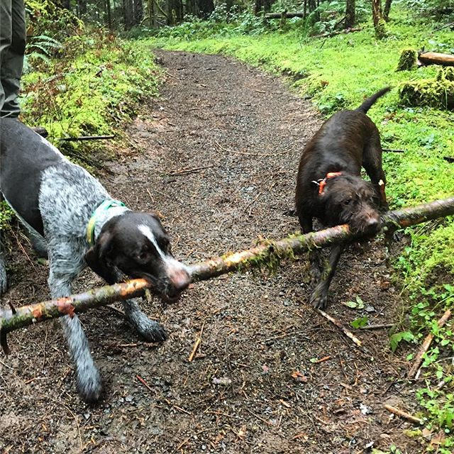 NUT maintenance crew. #gundogs #offseason #exploregon #oregon #upland