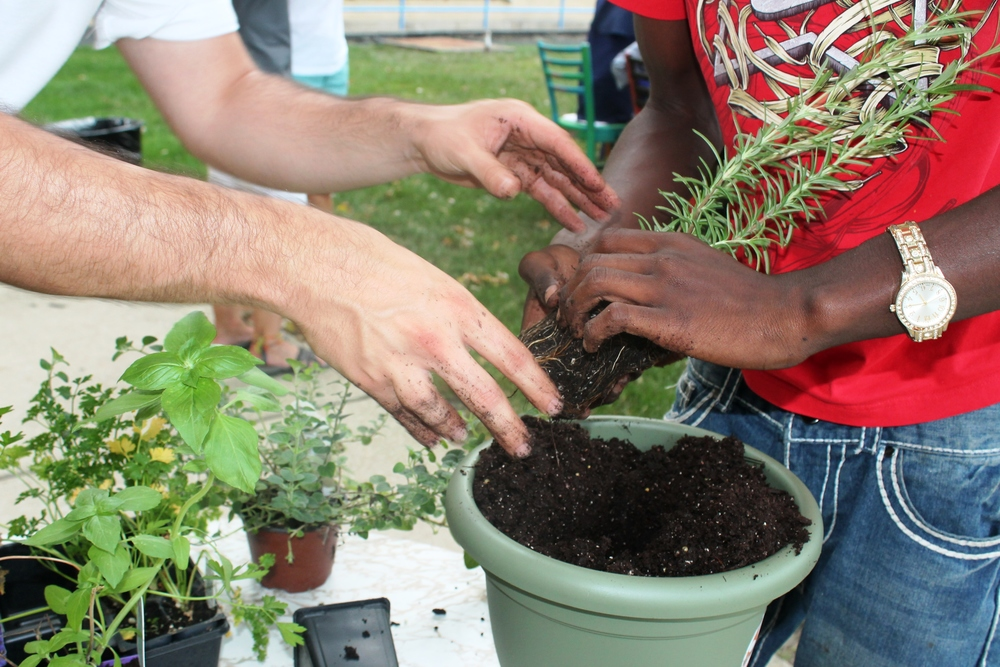 Members of Maria Kaupas Center Work together to plant rosemary for the community garden.