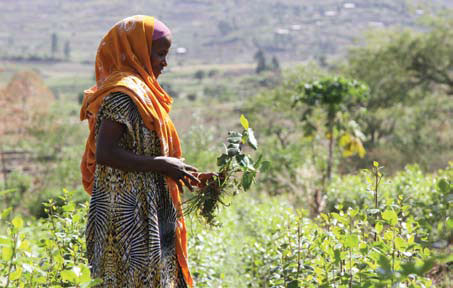 Mekiya Hamido is one of hundreds of thousands of Ethiopian small farmers who face the effects of climate Change. Kim Pozniak/CRS