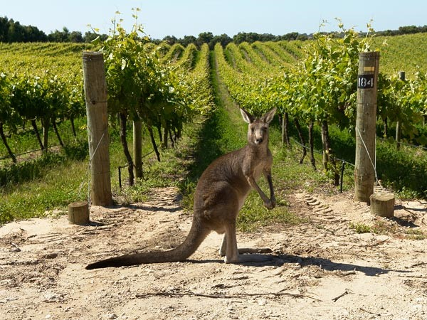 Australia:More than Just Shiraz - August, 2016