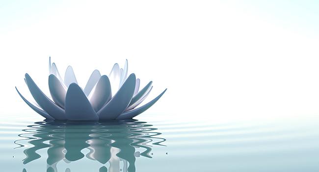 lotus_banner4_cropped2.jpg