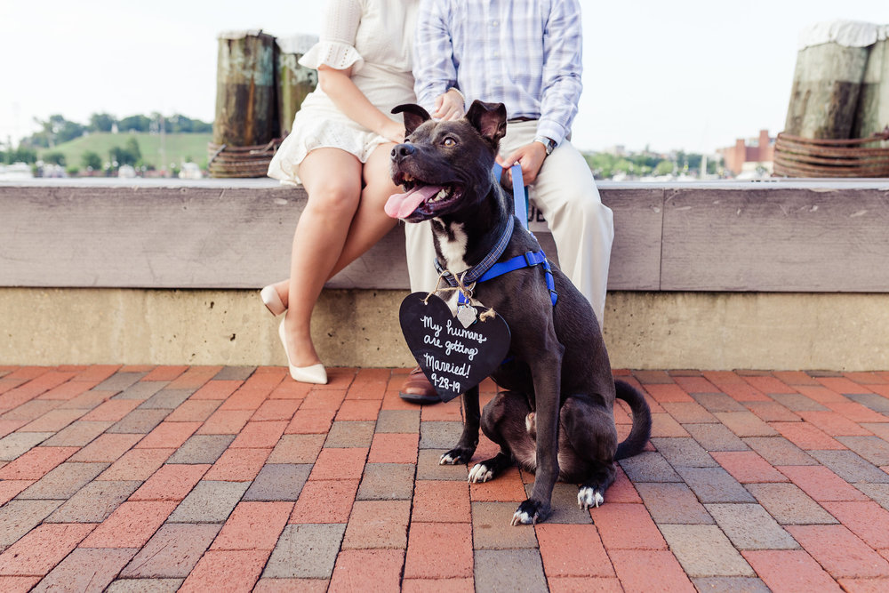 Cute Dog Engagement Sign