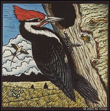 "<i>Pileated Woodpecker</i>, hand colored linoleum cut, 9"" x 9"""