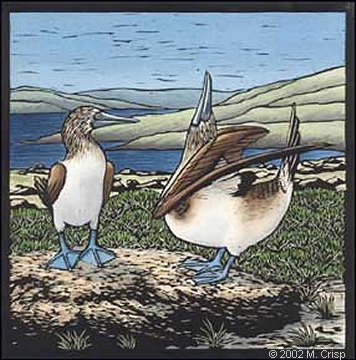 "<i>Galapagos Alphabet: Blue-footed Boobies</i>, hand colored linoleum cut, 8"" x 8"""