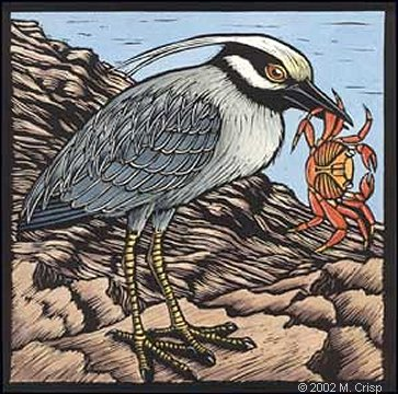 "<i>Galapagos Alphabet: Yellow Crowned Night Heron</i>, hand colored linoleum cut, 8"" x 8"""