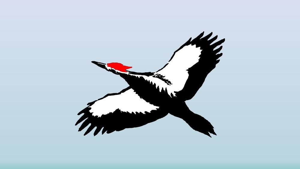 Pileated_Woodpecker_1920x1080.jpg