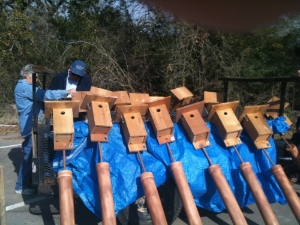 New Bluebird Boxes