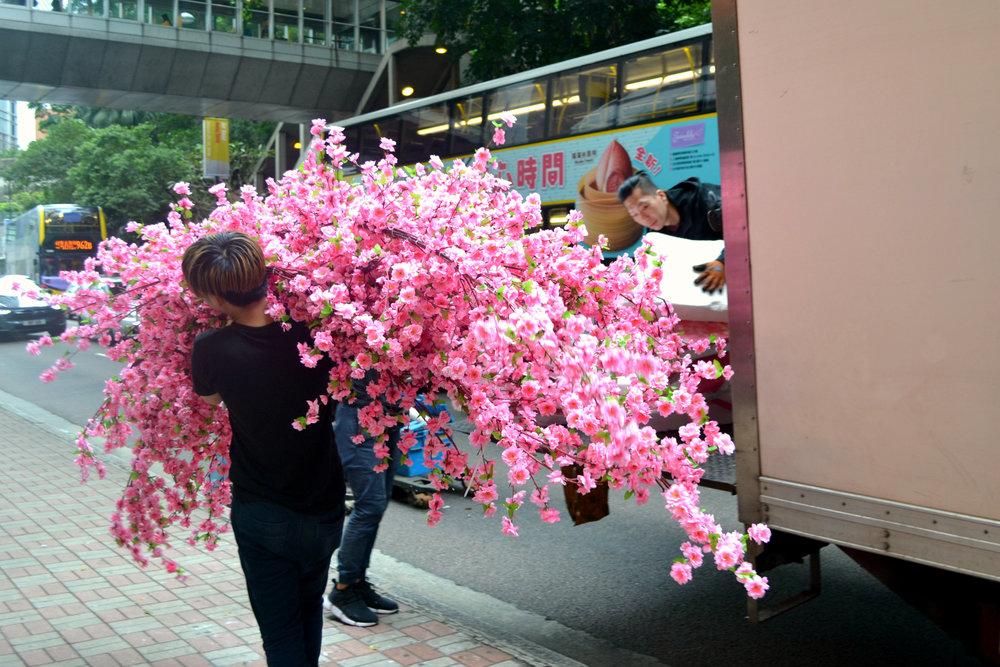 Hong Kong blossom.jpg